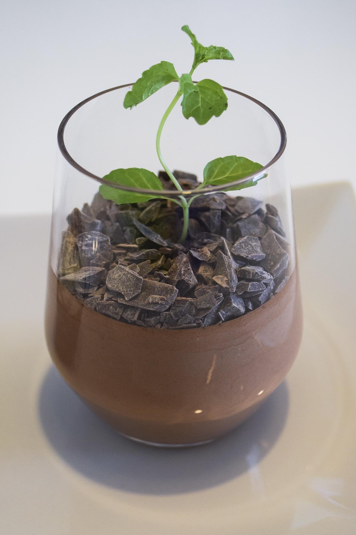 chokolademousse-som-plante-3